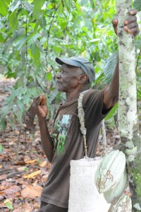 Haitian cacao farmer from the north
